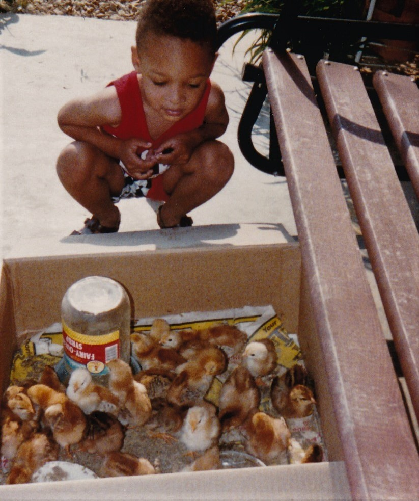 Jack Johnson's Great Grandson Marcus Johnson looking at baby chicks